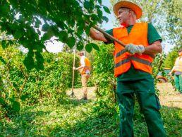 Grünpflege Team der Orangerie Aukamm pflget den Baumbestand