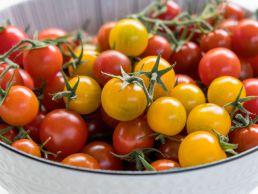 Wilde Tomaten in gelber Farbe